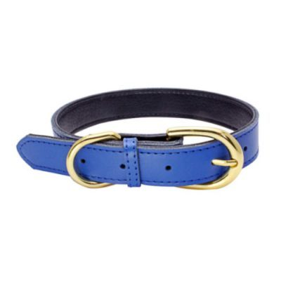 Colorful Collar Blue