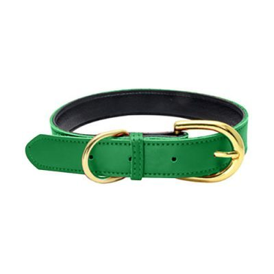 Colorful Collar Green