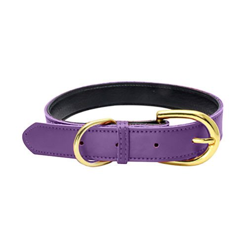 Colorful Collar Purple