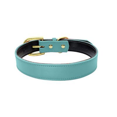 Colorful Collar Light Blue