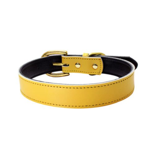 Colorful Collar Yellow