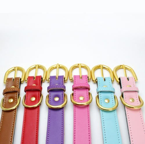 Colorful Collar Red