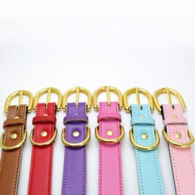 Colorful Collar Purple